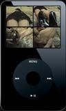 Fiona Sleeping - 01 (iPod 320x240)