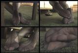 Fiona's Feet - Navy - 02 (Small 320x240)